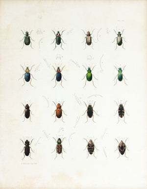 1854 Plate 20 - Ground & Water Beetles - Emmons