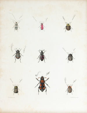 1854 Plate 22 - Carrion Beetles - Emmons