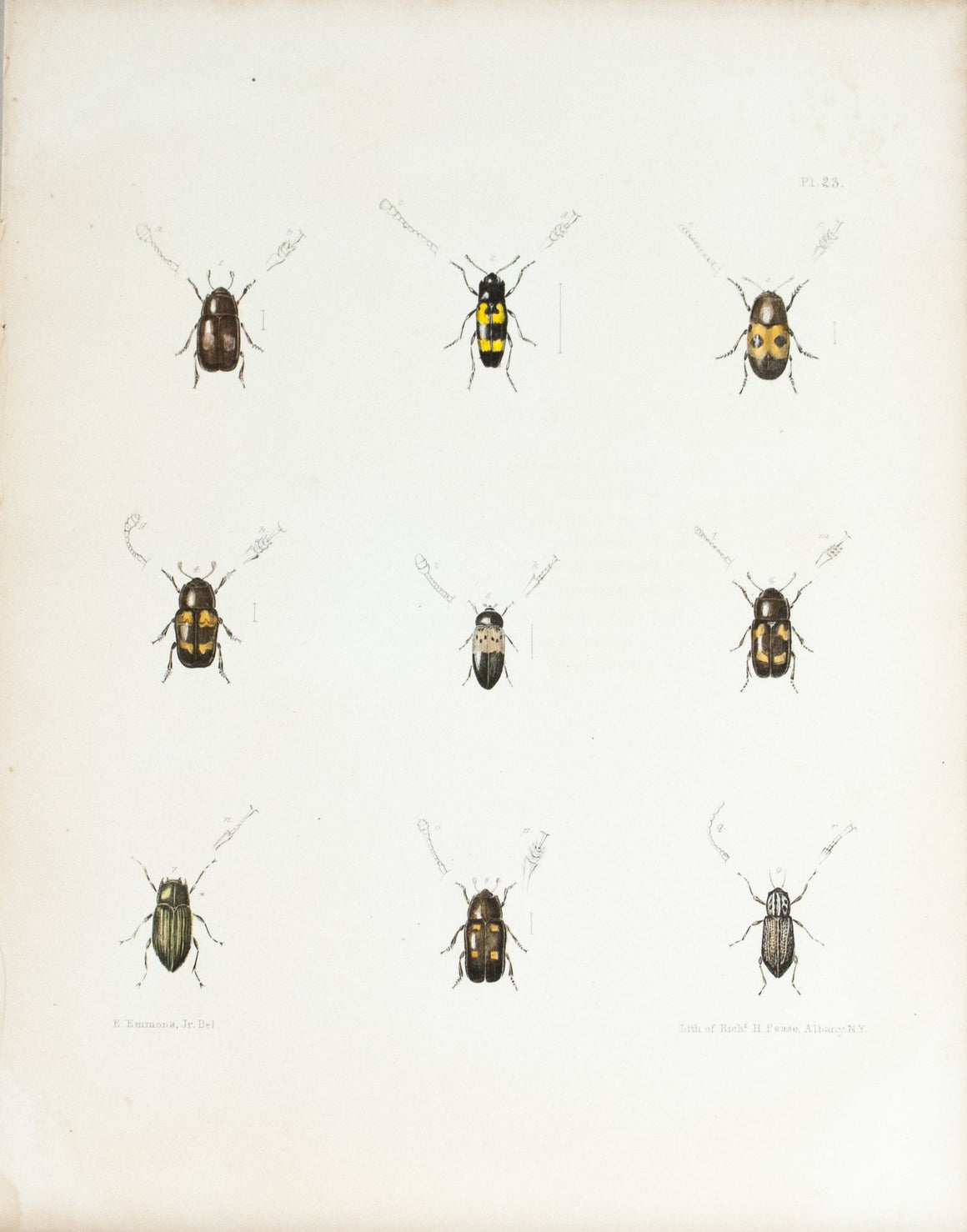 1854 Plate 23 - Bark and Ambrosia Beetles - Emmons