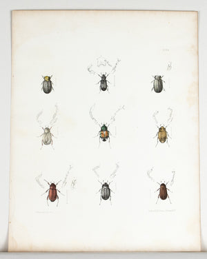 1854 Plate 24 -Hide Beetles - Emmons