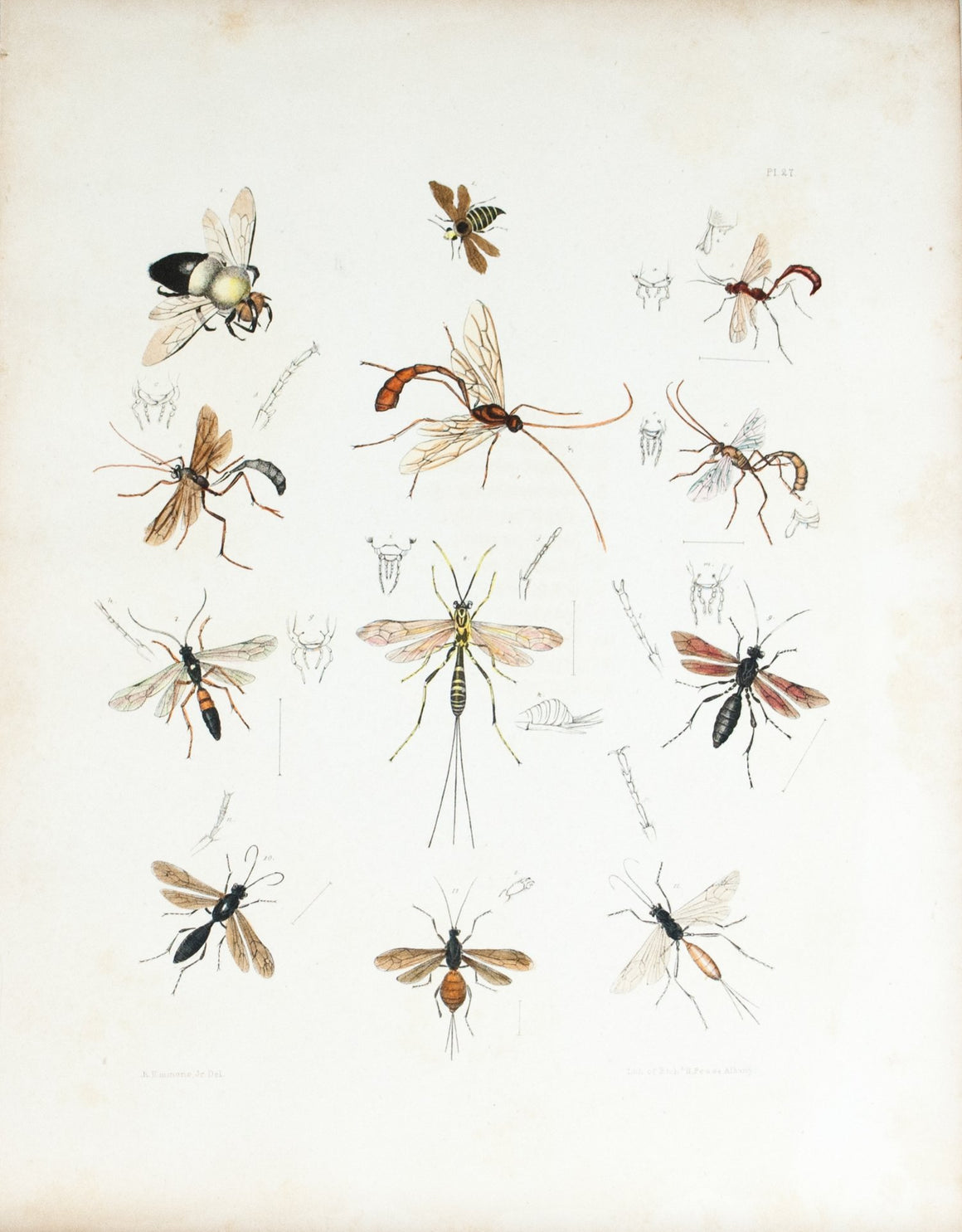 1854 Plate 27 -Wasps - Emmons