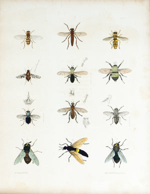 1854 Plate 28 - Assassin Flies - Emmons