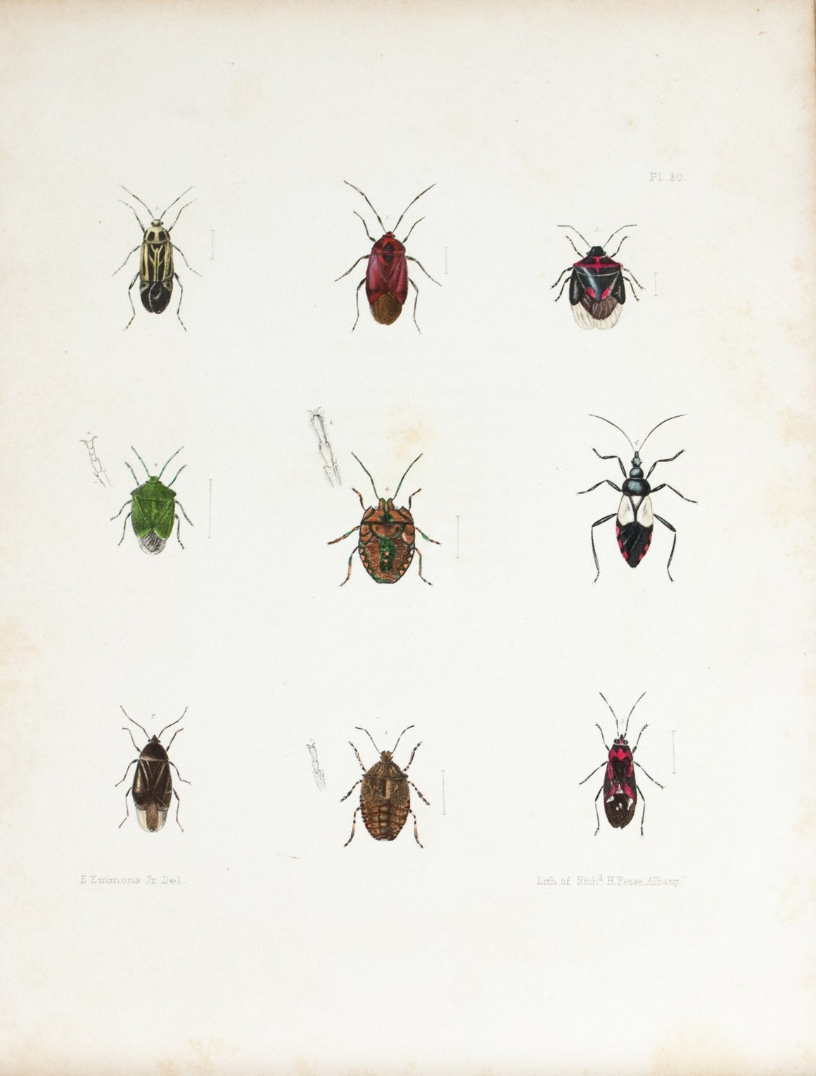 1854 Plate 30 - Aphids and Plant Bugs - Emmons