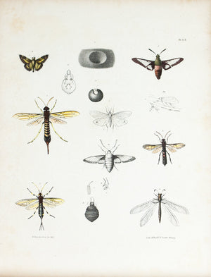 1854 Plate 32 - Wood Wasp - Emmons