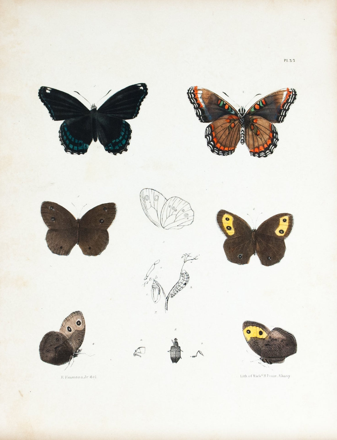 1854 Plate 33 - Admiral Butterfly - Emmons