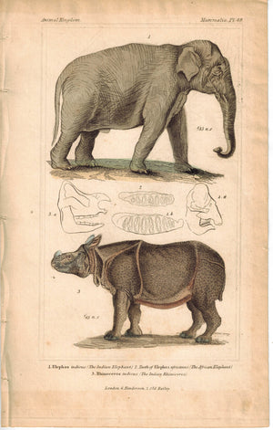 Indian Elephant and Indian Rhino Rhinoceros 1837 Engraved Cuvier Print