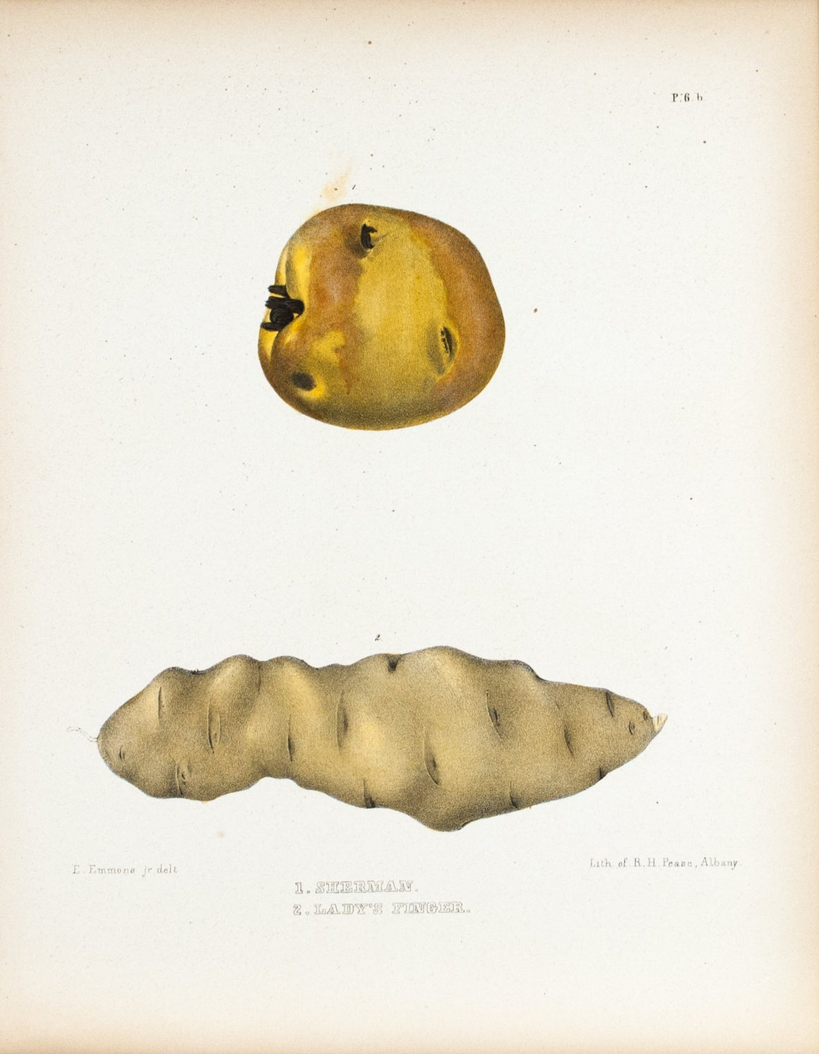 1849 Pl 6 b. Sherman & Lady's Finger - Emmons