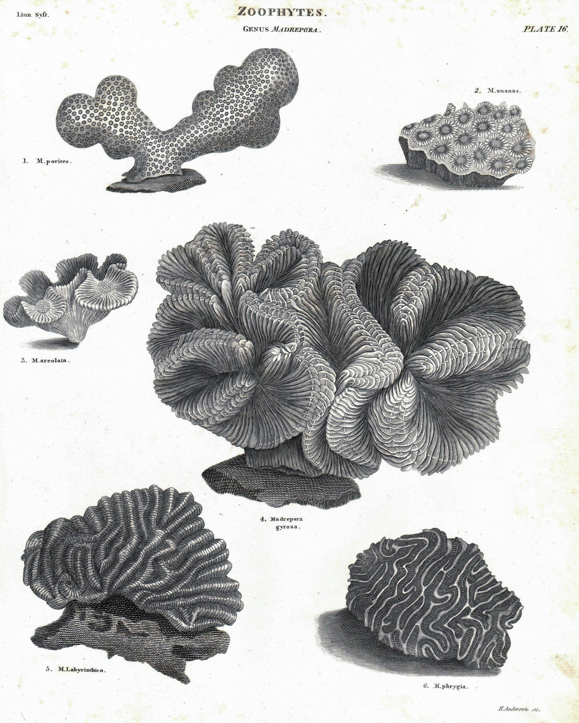 1834 Zoophytes Plate 16