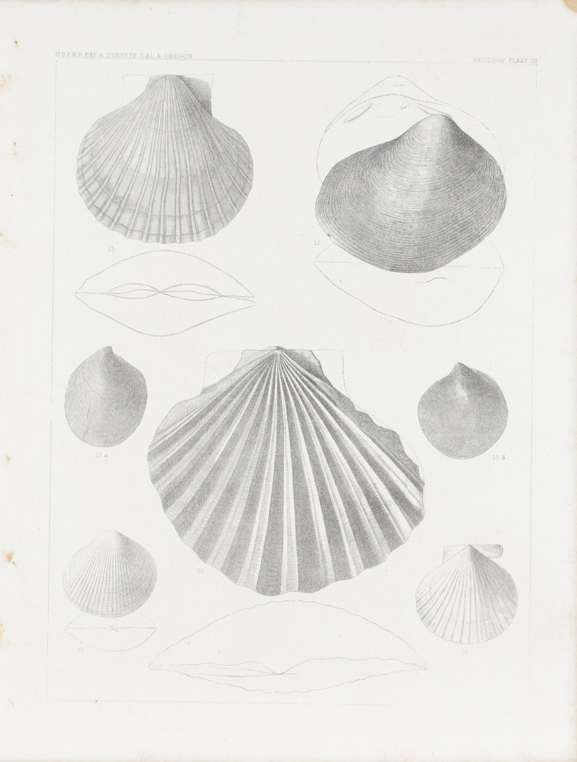California Shell Fossils Antique Survey Print 1856 B