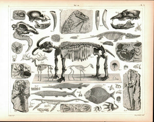 Fossils Missourium Theristocaulodon Antique Archaeology Print 1857