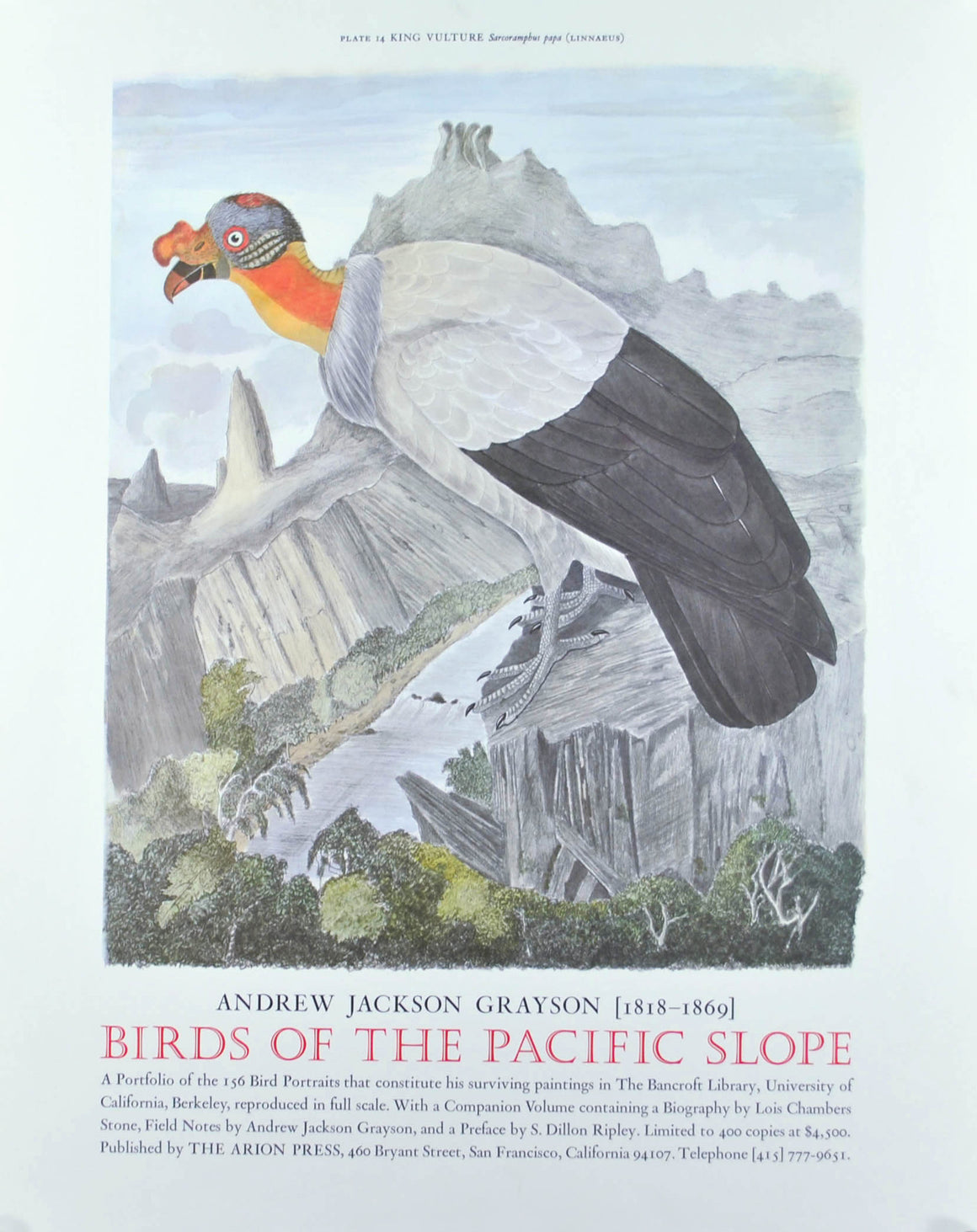 King Vulture Andrew Jackson Grayson Bird Print 1986 Birds of the Pacific Slope