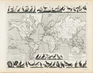 1857 Tef 106 Chart of the migrations of fishes and birds - JG Heck