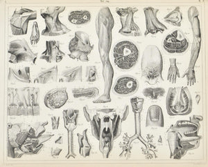 Human Organs of Respiration Voice Antique Anatomy Print 1857