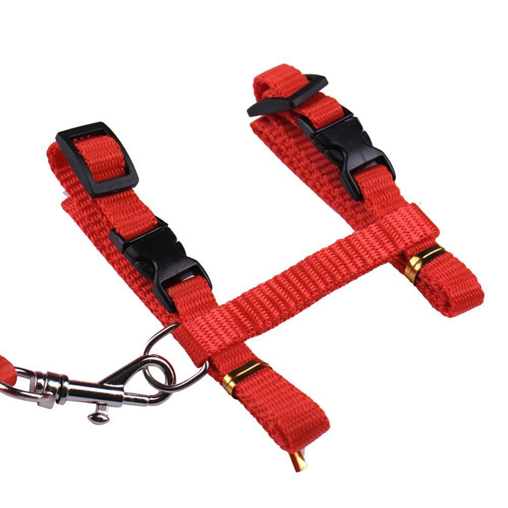 Hot Selling Cat Harness And Leash - QualityGrab