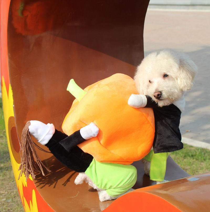 PUPPY CARRYING PUMPKIN COSTUME (HALLOWEEN)