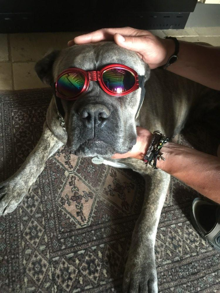 Fashionable Summer Dog Sunglasses