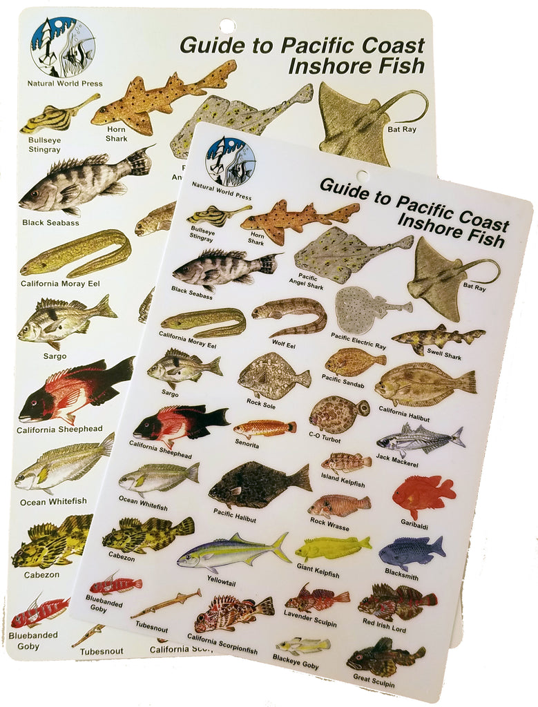 Pacific Coast Fishes Card