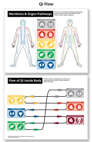 Qi Flow and Meridian Chart - Acupuncture Laminated Chart