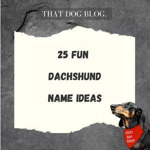 25 Name Ideas for your Dachshund (Sausage Dog)