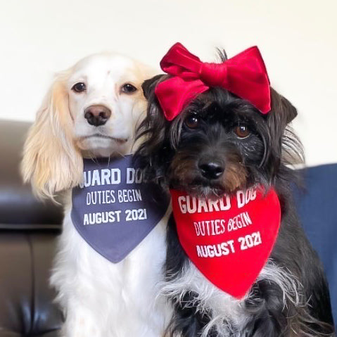 That Dog Shop Pregnancy Announcement Dog Bandana Guard Dog Duties - Red