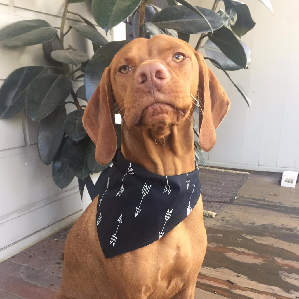 Dog Bandana - Black Arrows-That Dog Shop