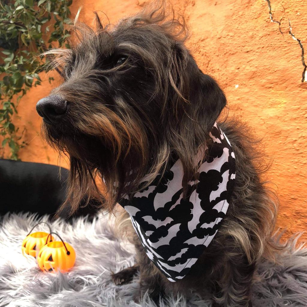 Dog Bandana - Halloween Bat Print-That Dog Shop