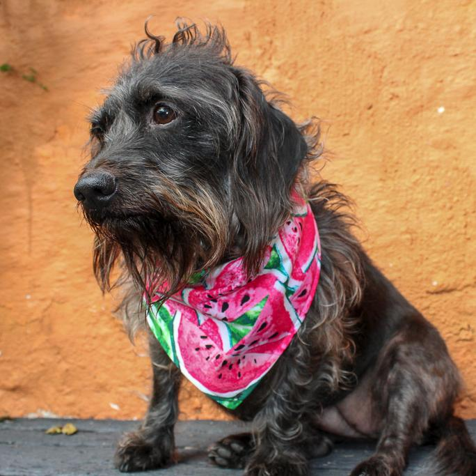 Dog Bandana - Watermelon-That Dog Shop