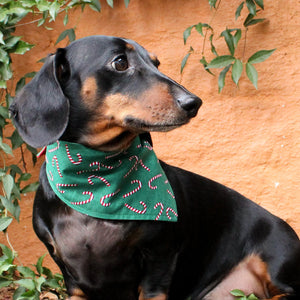 Dog Bandana - Candy Cane Print-That Dog Shop