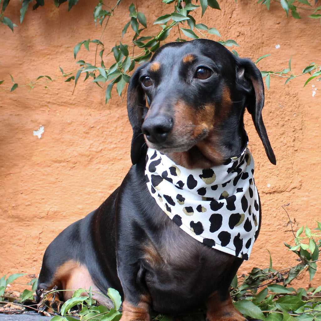 That Dog Shop My Dog & Me Bow & Bandana Set - Leopard Print