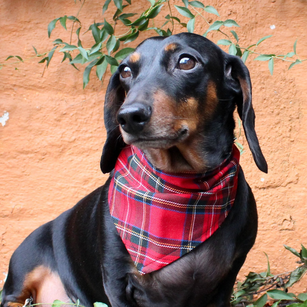 Dog Bandana - Red Tartan-That Dog Shop