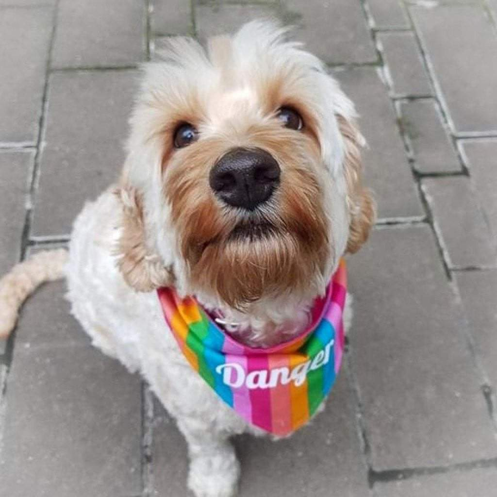 Dog Bandana - Rainbow Stripe-That Dog Shop