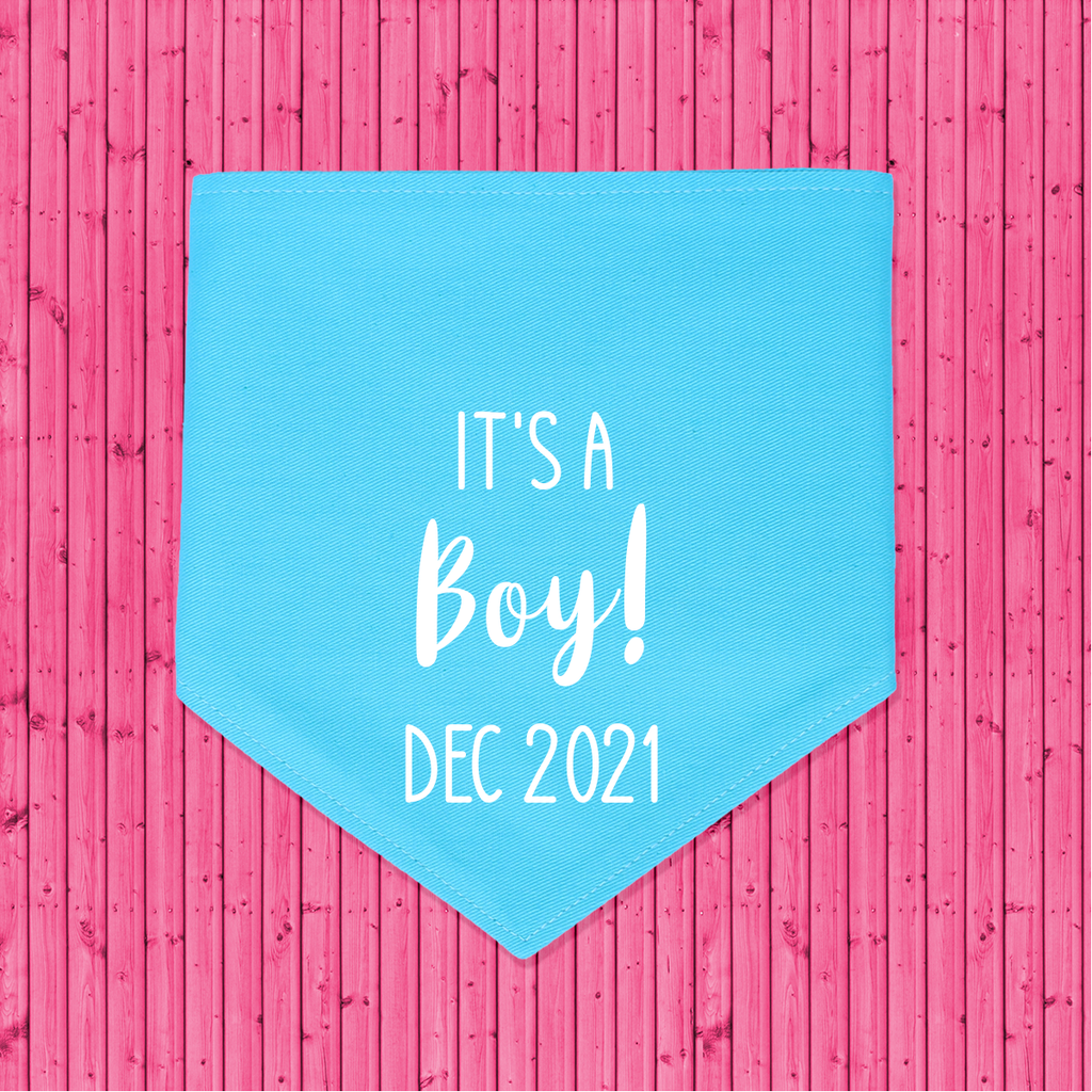 That Dog Shop Gender Reveal Announcement Dog Bandana It's a Boy! - Blue