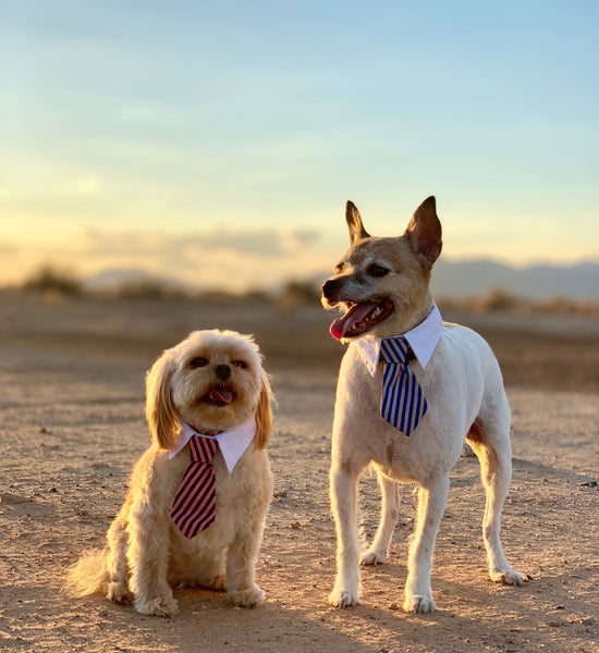 Striped Dog/Cat Tie Collars