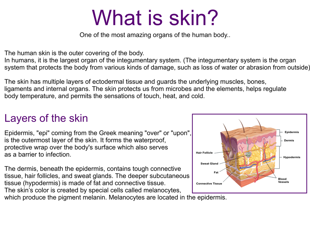 What is skin?..