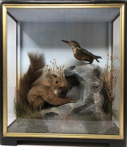 Taxidermy Victorian Red Squirrel & Kingfisher