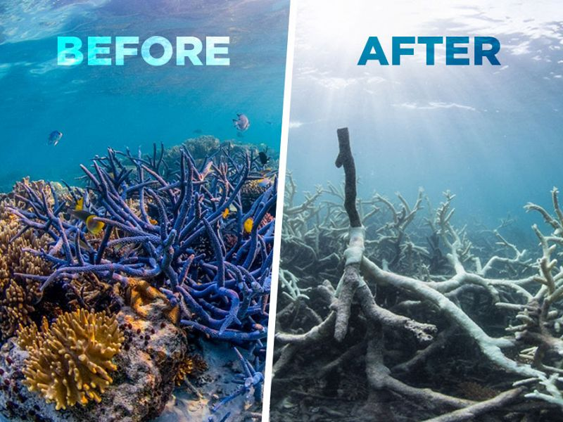 Bleaching of The Great Barrier Reef