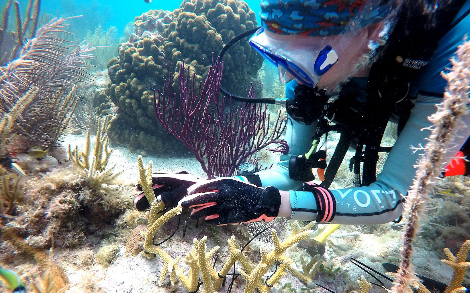 Out Planting coral reefs