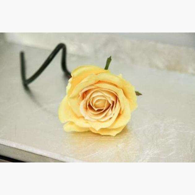 Rose Bouquet of 6 Roses - Buttermilk