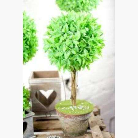 Topiary Tree in Rustic Pot
