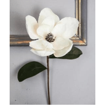 Large Magnolia Stem in Cream