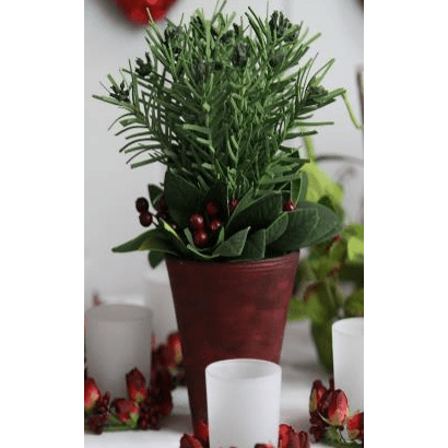 Potted Fir, Leaves and Red Berries
