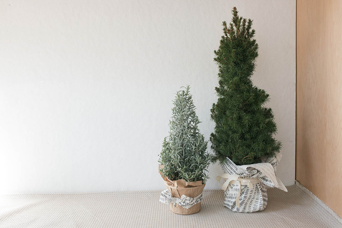 Holiday Decor - Rebecca Atwood