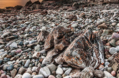 rocks at a beach