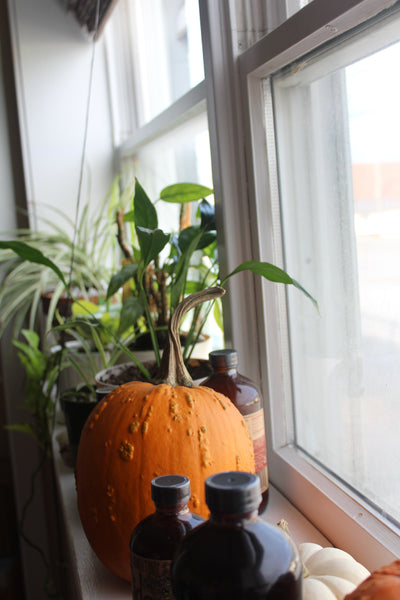 Making the new Fire Cider offices feel like home with plants and fall decorations