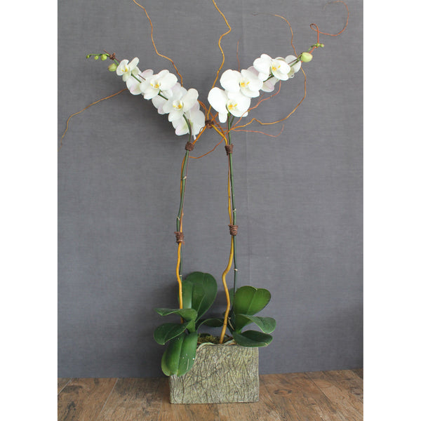 Premium Double Stem Orchid - The Blooming Idea Florst - The Woodlands, Texas
