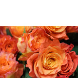 Classic Dozen (6 Color Options) - The Blooming Idea Florst - The Woodlands, Texas