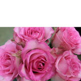 Mad for You (24 Roses) - The Blooming Idea Florst - The Woodlands, Texas