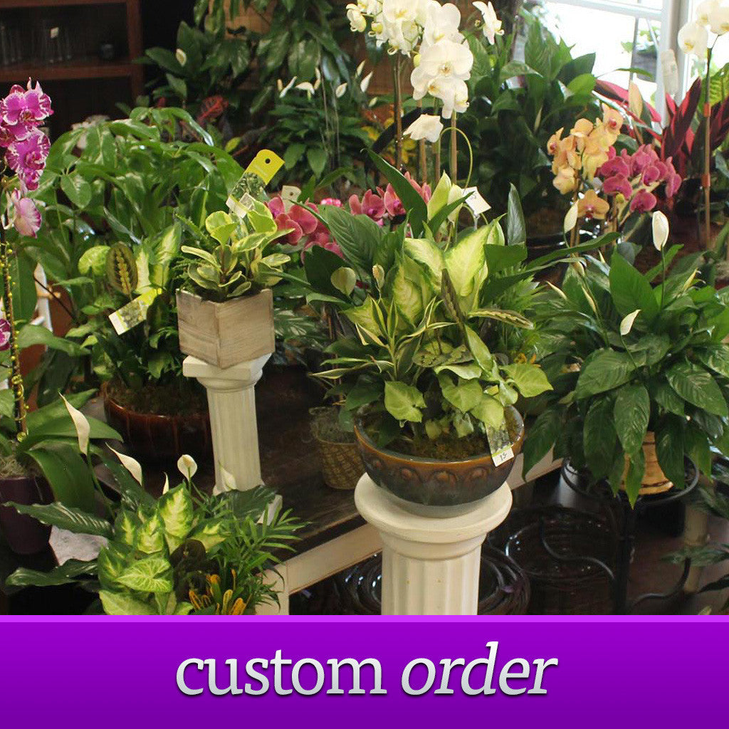 Custom Order Plants - The Blooming Idea Florst - The Woodlands, Texas