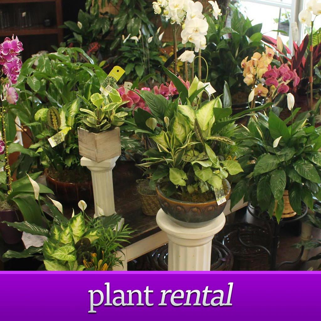 Plant Rental - The Blooming Idea Florst - The Woodlands, Texas