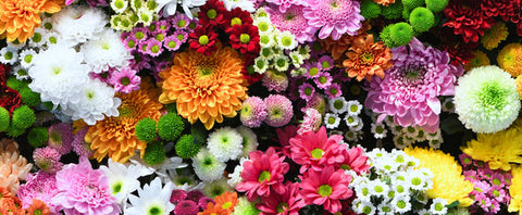 Spring flowers to plant this year